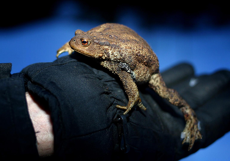 Hoppar det grodor ur munnen kan det få efterräkningar. Foto: Tomas Nyberg