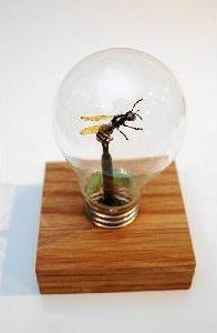 En insekt i en glödlampa