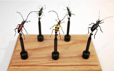 Insekter noterade på små stativ
