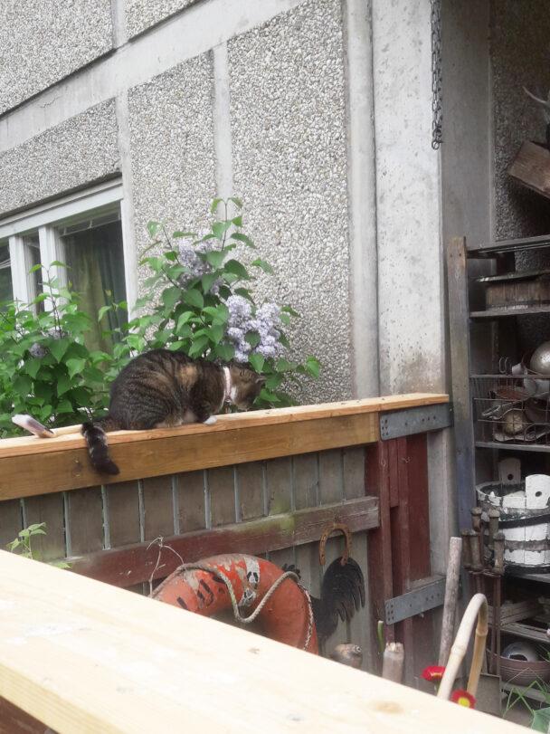 En katt som sitter på ett balkongräcke
